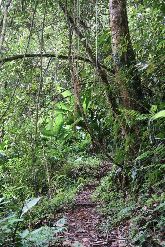 Sademetsää Kinabalu Parkissa Borneossa