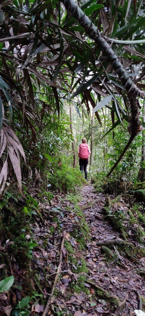 Borneo: Nainen sademetsässä Kinabalu Parkissa Borneossa