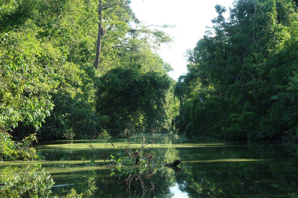 Kinabatang joki Borneossa