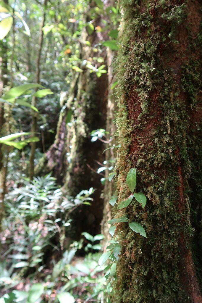 Sepilokin RDC sademetsää Borneossa