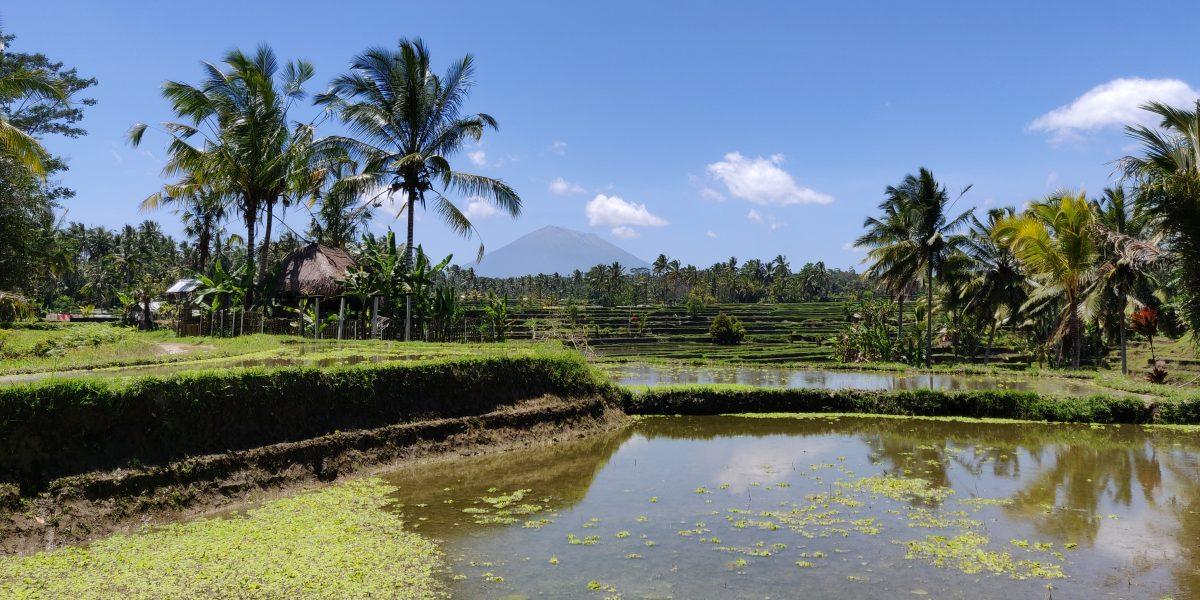 Bali kutsuu! Ubudin matkaopas ja etätyöntekijän elämää